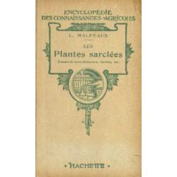 PLANTES SARCLÉES